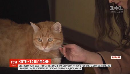 Рыжие талисманы: два котика 10 лет живут в румынском Национальном музее