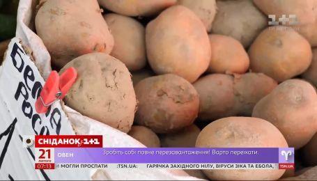 Українські фермери очікують рекордно раннього сезону молодої картоплі  – Економічні новини