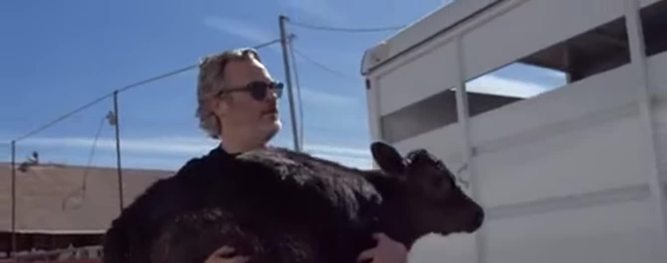 Оскароносный Хоакин Феникс спас корову и теленка с бойни