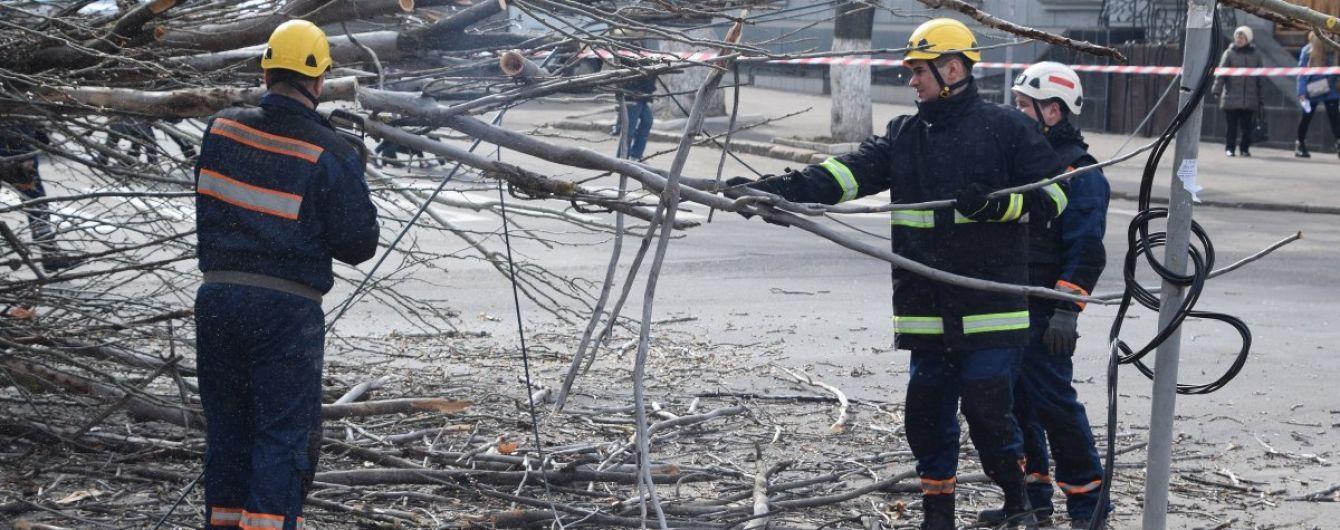 В Івано-Франківській області дерево вітром знесло на дорогу. Постраждав пасажир автобуса