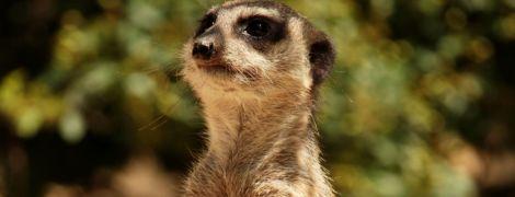 Африканка перенесла 66 операций и ампутацию конечностей из-за укуса мангуста