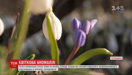 Из-за аномально теплой погоды в Черкасской области расцвело 30 гектаров подснежников