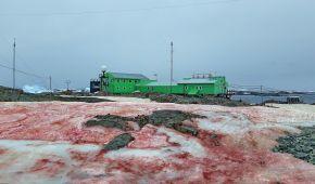 """Українську антарктичну станцію оточив малиновий сніг: який це має вигляд та в чому """"розгадка"""""""