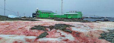 """Украинскую антарктическую станцию окружил малиновый снег: как это выглядит и в чем """"разгадка"""""""
