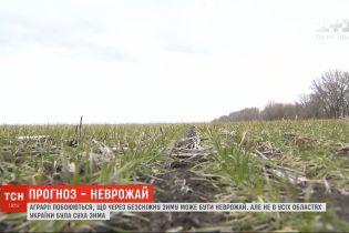 Аграрии опасаются, что из-за бесснежной зимы в Украине может быть неурожай