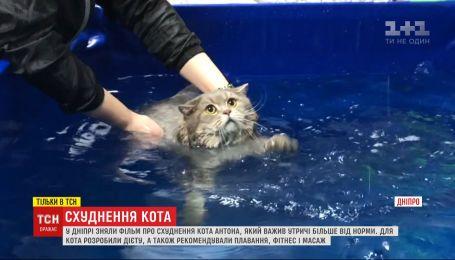 Дієта, масаж і плавання: фільм про схуднення кота Антона відзняли у Дніпрі