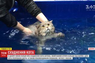 Диета, массаж и плавание: фильм о похудении кота Антона отсняли в Днепре