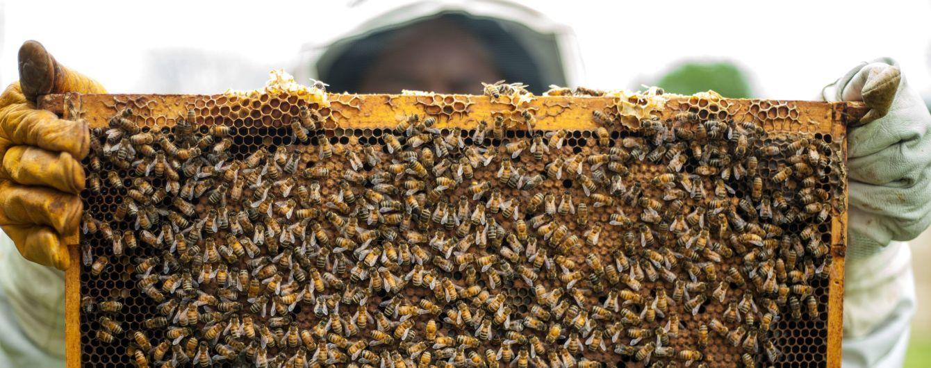 Україна стала найбільшим експортером меду у світі