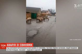 Грузовик со свиньями перевернулся под Харьковом