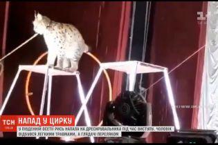 В Южной Осетии рысь набросилась на дрессировщика во время выступления в цирке