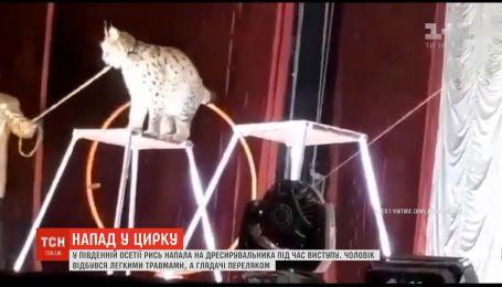 У Південній Осетії рись накинулась на дресирувальника під час виступу у цирку