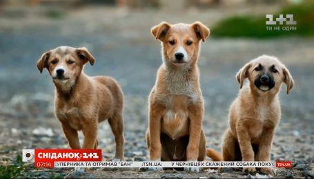 Стерилизация – важная процедура, которая помогает спасти жизнь животных