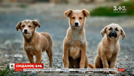Стерилізація – важлива процедура, що допомагає врятувати життя  тварин