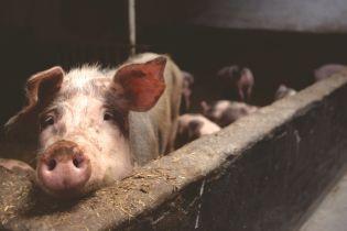 В Україні поменшало всіх сільськогосподарських тварин