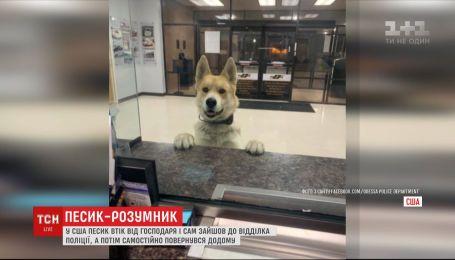 Собака в США втік від господаря, завітав до відділка поліції та повернувся додому