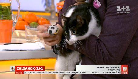Котик Босс ищет заботливую семью