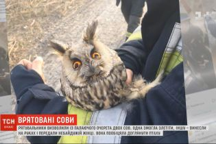 У Дніпрі рятувальники визволили з охопленого вогнем очерету двох сов