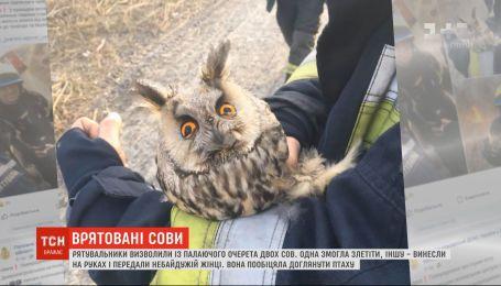 В Днепре спасатели вызволили из горящего камыша двух сов