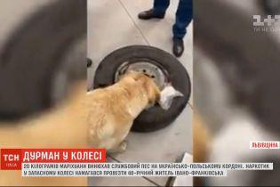 Службовий пес знайшов 20 кілограмів марихуани в авто українця на кордоні з Польщею