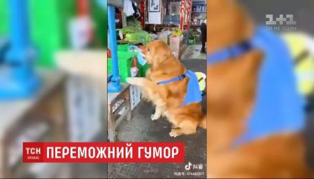 Трудности изоляции: Сеть покорило видео с собакой в маске, которая делает покупки