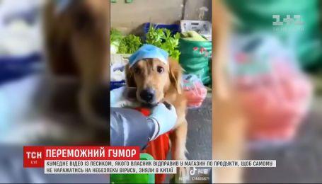 Лайфхак по выживанию: китайцы отправляют в магазины за продуктами собак в масках