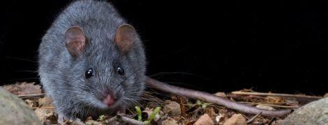 Учені повідомили про перший вид, повністю винищений пожежами в Австралії