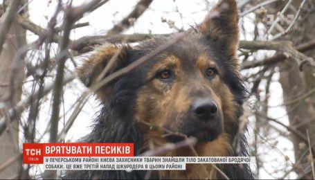 Кияни стурбовані появою нового догхантера через жорстоке вбивство пса на Печерську