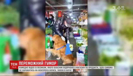 В Китае набирает популярность видео, на котором собака в маске самостоятельно покупает продукты в маркете