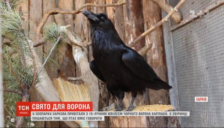 Рыбой, овощами и фруктами поздравили с днем рождения ворона Карлушу в зоопарке Харькова