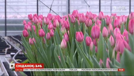 Як обрати гарні квіти та зберегти їх свіжими якомога довше – поради флористки Людмили Джус