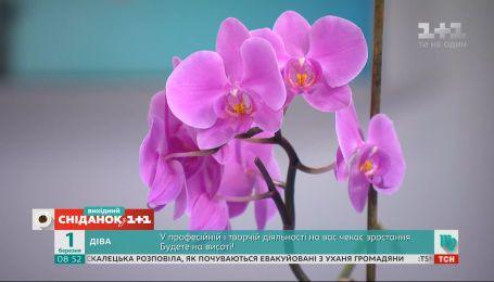 Шокова терапія для орхідеї: що робити, якщо квітка не хоче цвісти