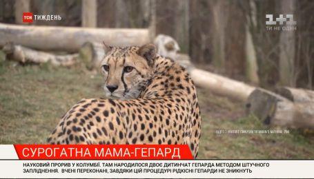 3-D фото в Facebook, опасный челлендж, суррогатная мама-гепард: новости с онлайн-трансляции