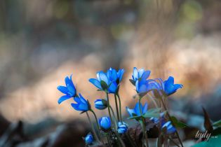 День добра: гороскоп на 5 марта