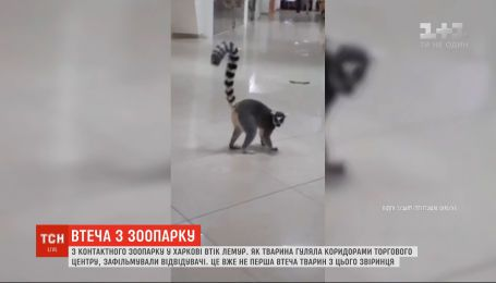 Відвідувачі зафільмували, як лемур гуляв коридорами ТЦ у Харкові