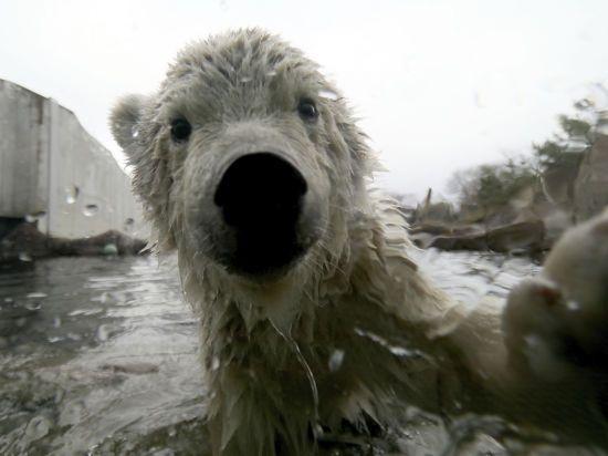 Українці згуртовуються, щоб рятувати від голоду тварин у зоопарках