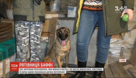 У Сумах собака врятував хазяйку, яка впала до льоху
