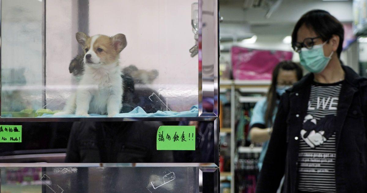 коронавирус у собак передается кошкам