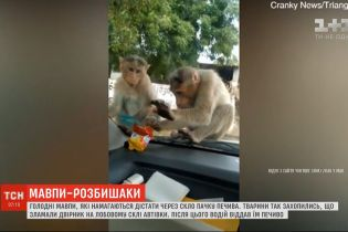 В Индии засняли, как обезьяны пытаются стащить еду через стекло машины