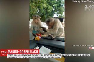 Голодні мавпи намагалися вкрасти з автівки пачку печива