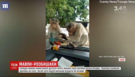 Голодные обезьяны пытались украсть из автомобиля пачку печенья