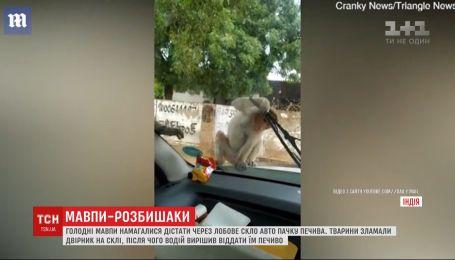 Обезьяны, которые пытались украсть еду сквозь стекло автомобиля, стали звездами интернета