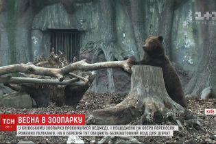 Жителей украинских зоопарков начинают постепенно выпускать в летние загоны