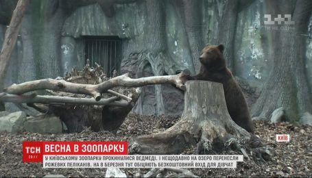 Мешканців українських зоопарків починають поступово випускати у літні загони
