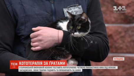В исправительной колонии на Киевщине тестируют кототерапию: четверо пушистиков уже под опекой осужденных