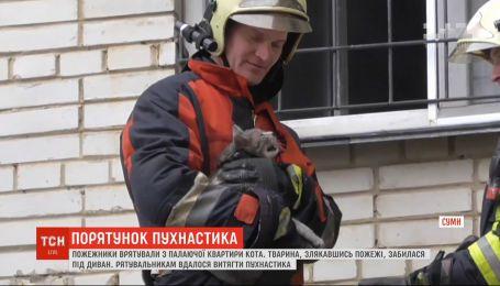 Пожежники в Сумах врятували кота із охопленої полум'ям квартири