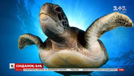 Черепаха Йоши преодолела по воде 37 тысяч километров, чем поразила многих учёных мира