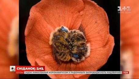 Пчелы, уснувшие в цветке: история одного фотоснимка