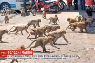 В Таиланде голодные обезьяны просто на улицах дрались за еду