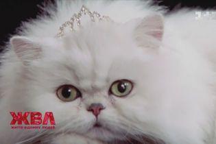 Оскароносний кіт та порося у головній ролі: як домашні улюбленці стають зірками екранів