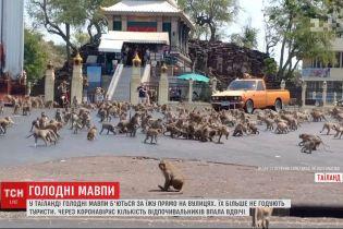 У Таїланді мавпи б'ються за їжу, бо їх більше не годують туристи